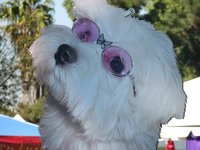 Best_friends_event_doggie_in_glasses_1