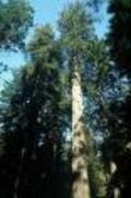 Tree_environmentalism_1